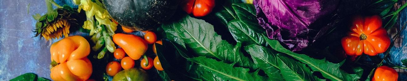 Das erste Gemüse vom heimischen Acker – es dauert nicht mehr lange